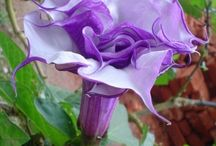 Beautiful Blooms  / by Jill Carroll