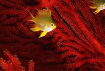 Coral Reefs Gif made Agababy / Coral Reefs Exotic Fish Amazing life under water  beautiful sea life
