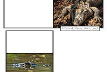 Crocodilians Lap Book