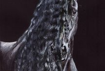 Arabské kone
