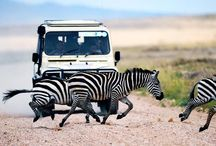 Africa / by BBC Travel