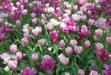 Flowers / by Debbi Odell Sebris