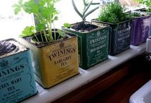 windowsill gardening / research for my attempts to grow an herb garden on my tiny kitchen windowsill / by katie ferrari