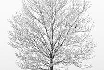 Stromy ...