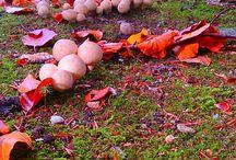Dutch Autumn Colours