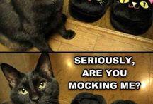Humor :P / Funny posts.