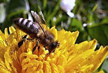 Rikkaruohoista eroon mehiläisiä myrkyttämättä.