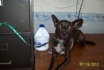 Shelter Dogs and Cats - please share! / These dogs are at the Lewisburg Animal Shelter in Lewisburg, TN  and other pounds. Please share these dogs and help save their lives. http://www.facebook.com/pages/Lewisburg-Animal-Shelter-Dogs/102219439868340