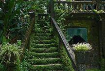 Зелений сад