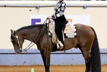 Western Dream - Quarter Horses