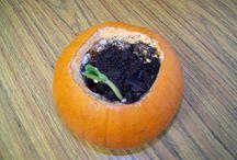 Growing plant ideas