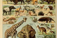 Ретро картинки животных их книг
