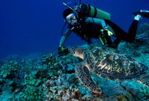 Diving on #Guam / Diving on #Guam