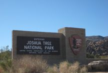 Joshua Tree National Park / All about Joshua Tree National Park and those great trees!