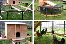 chickens - backyards, coops, free ranging...