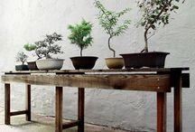 My dream home / Bonsai room - no cats allowed