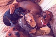 Silly Sausages / All things sausage!