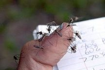 Zanzare mosche insetti