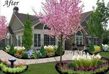 Debby's garden!
