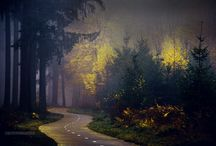 Most Beauty Forest Photography