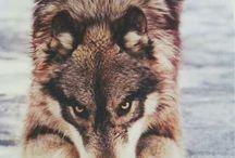 wolfFAN