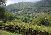 Furore Amalfi Coast / Wine Tasting