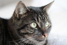 Katten Cats Jack Minet / My cats Jack and Minet