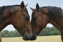 <3 HORSES / The amazing creatures of the world.