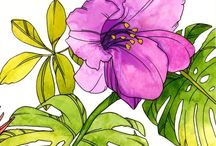 Tropical flowers watercolor