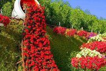 Artistic garden creation