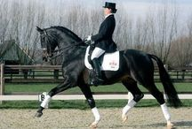 #EquestrianDressage