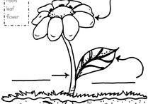 homeschool science - plants / by Meggen Devlin
