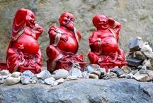 buddha / by gordy