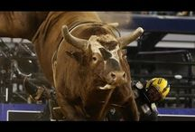Bull Riding  / by The Lemonade Digest