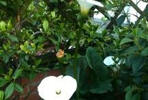My roof garden