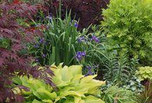 Pias trädgård