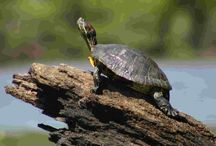 Turtles... / by William Raley