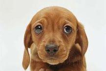 Cute animals / Cutest animals pict