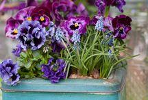 FARBE: lila, blau, flieder