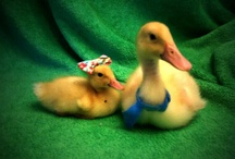 That's Just Ducky! / Real & Rubber / by Nancy Pate