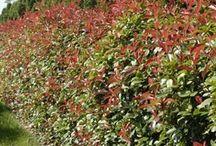 Plantes de lisière