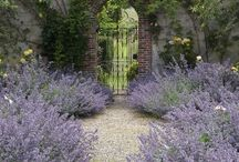 Who loves Lavender? / All things Lavender....Pomanders, decorations, Bushes, stems and Lavender Potted Plants.