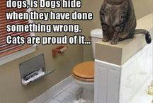 PETS&ANIMALS