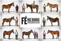 Fé nos burros / vi essa exposição no Porto e adorei :-)
