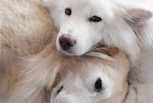 my favourite dogs