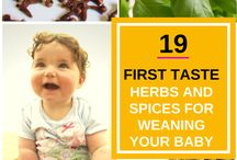 Weaning Guide - Herbs and Spices
