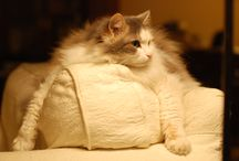 mycats / mijn catten