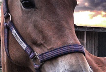 Horses / by Karie Dixon