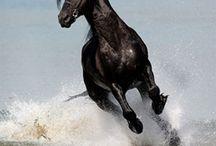 Horses In Motion / by Debra Gillet