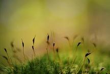Moss / Nature